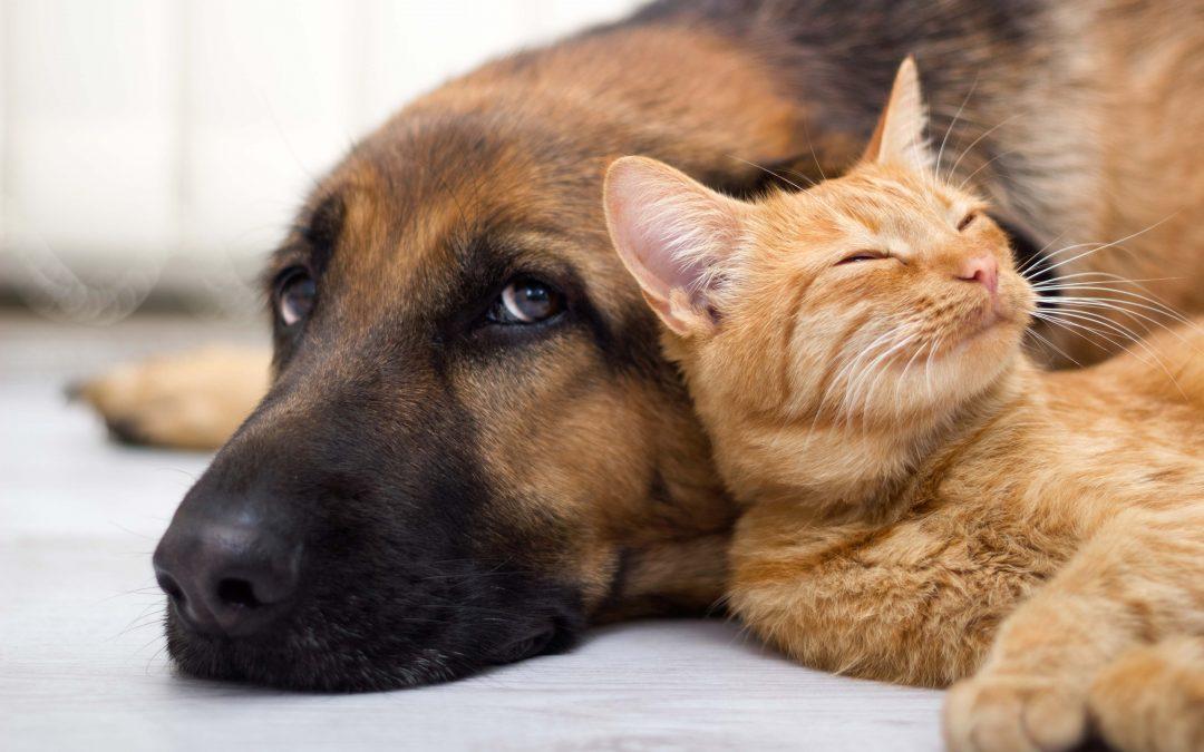 ¿Cuáles son los temibles parásitos que afectan a su mascota?