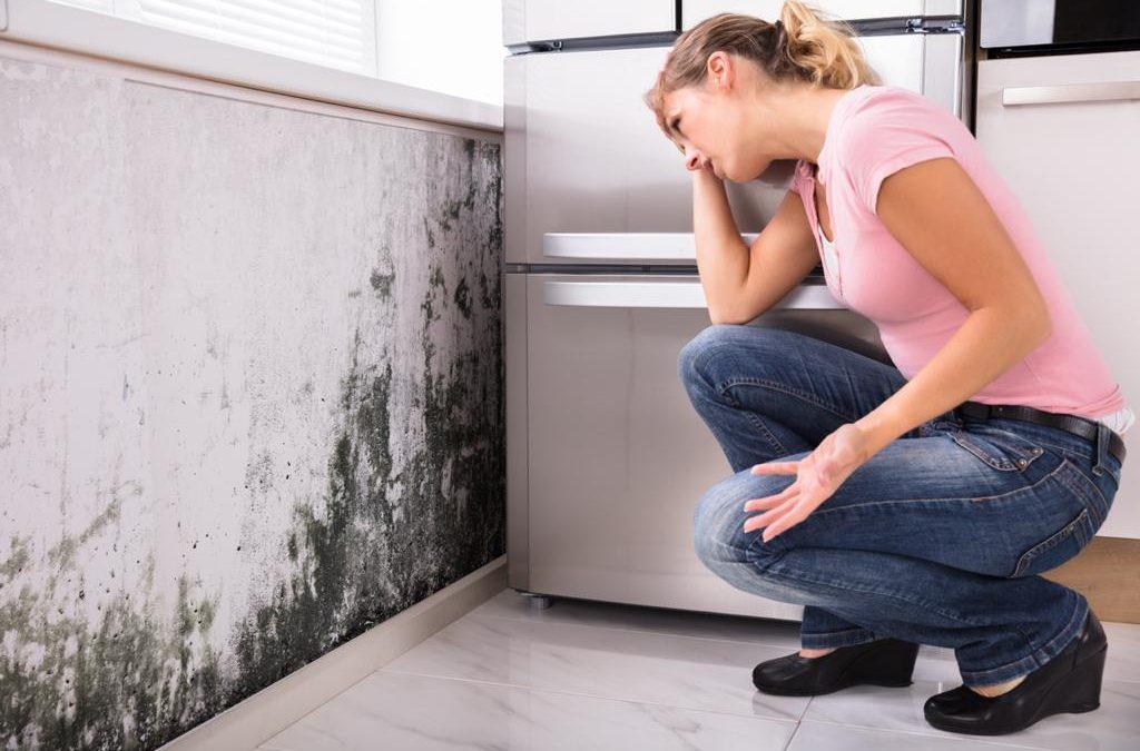 ¿Cómo eliminar la humedad y moho en el hogar para evitar afectaciones en la salud?
