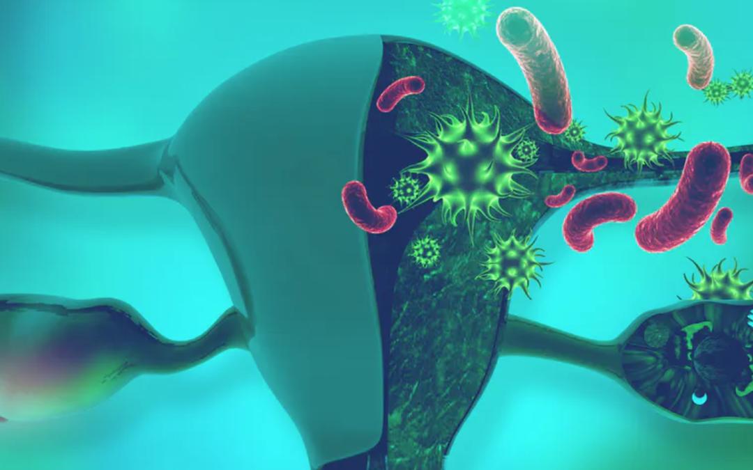 Así son los microorganismos que viven en el útero de las mujeres